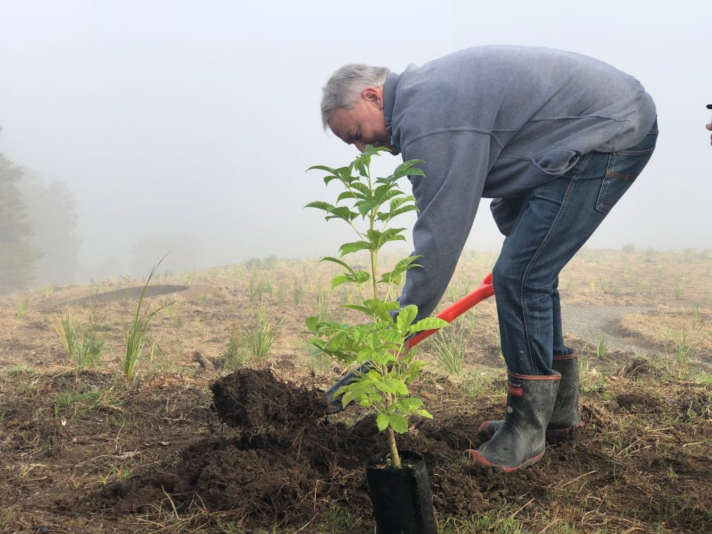 Auckland Mayor Phil Goff plants millionth native tree at Totara Park.